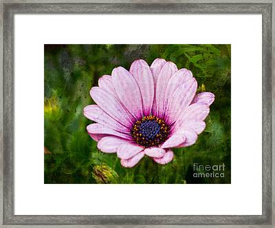 Antique Flower Framed Print by Lutz Baar