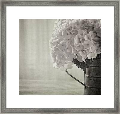 Antique Hydrangea Framed Print by Kim Hojnacki
