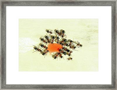 Ants Feeding Framed Print by Heiti Paves