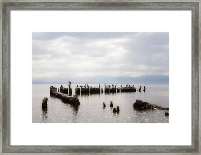 Apostles Of The Salton Sea Framed Print by Hugh Smith