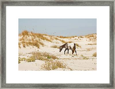 Appaloosa Beach Framed Print by Barbara Kraus - Northrup