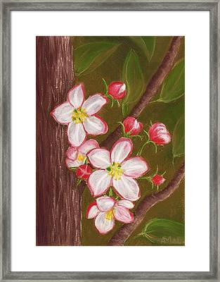 Apple Blossom Framed Print by Anastasiya Malakhova