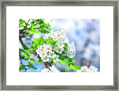 Apple Blossom Framed Print by Wladimir Bulgar