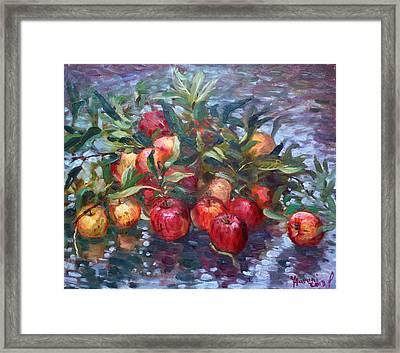 Apple Harvest At Violas Garden Framed Print by Ylli Haruni