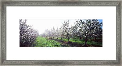 Apple Orchard, Hudson Valley, New York Framed Print by Panoramic Images