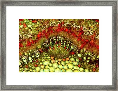 Apple Stem Framed Print by Marek Mis