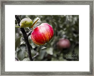 Apple Framed Print by Steven Ralser