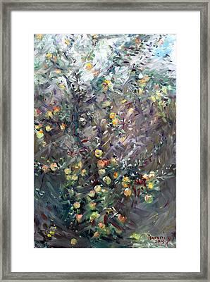 Apple Tree  Framed Print by Ylli Haruni