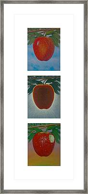 Apples Triptych 2 Framed Print by Don Young