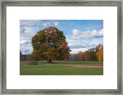 Appleton Tree Framed Print by David Stone