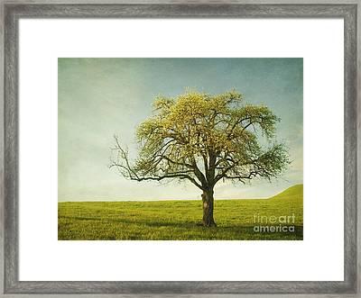 Appletree Framed Print by Priska Wettstein