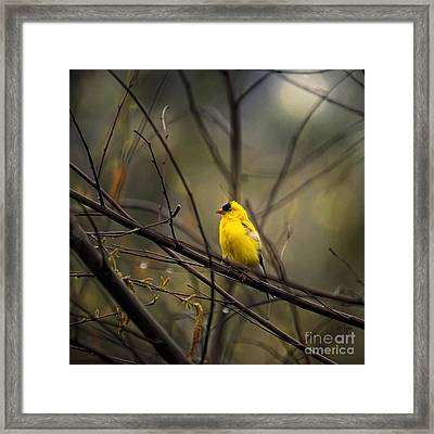 April Showers In Square Format Framed Print by Lois Bryan