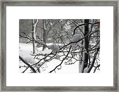April Snow Framed Print by Kay Novy