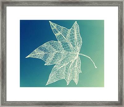 Aqua Leaf Study 1 Framed Print by Cathy Jacobs