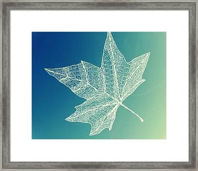 Aqua Leaf Study 4 Framed Print by Cathy Jacobs