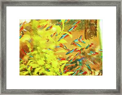Aquarium Art 7 Framed Print by Steve Ohlsen