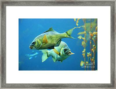 Aquarium Framed Print by Tap  On Photo