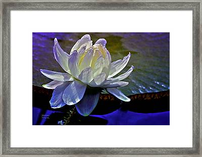 Aquatic Beauty In White Framed Print by Julie Palencia