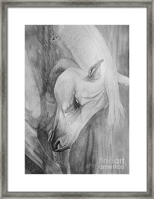 Arabian Gentleness Framed Print by Silvana Gabudean