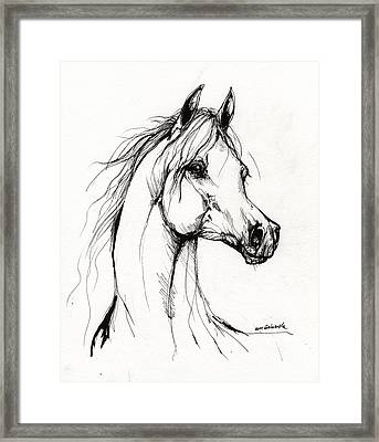 Arabian Horse Drawing 38 Framed Print by Angel  Tarantella