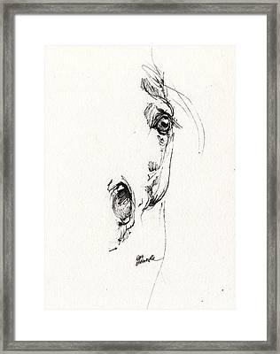 Arabian Horse Sketch 2014 05 24 H Framed Print by Angel  Tarantella