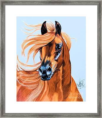 Arabian Portrait In Color Pencil Framed Print by Cheryl Poland