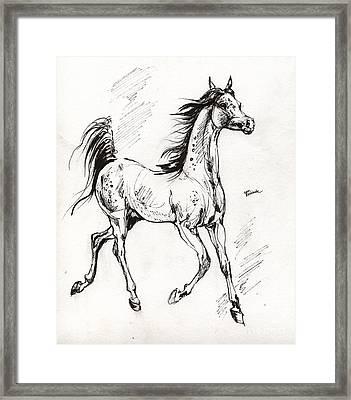 Arabian Yearling Framed Print by Angel  Tarantella