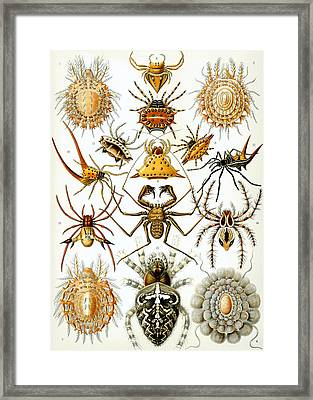 Arachnida Framed Print by Georgia Fowler