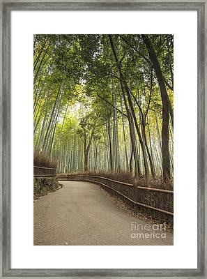 Arashiyama Kyoto Japan Framed Print by Colin and Linda McKie