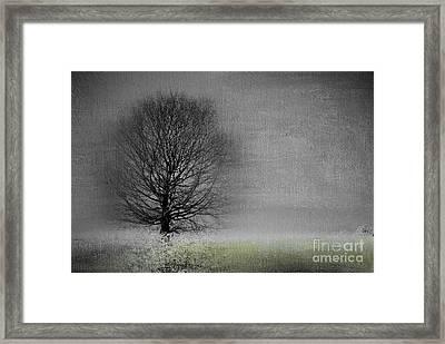 Arbrensens - V06gr Framed Print by Variance Collections