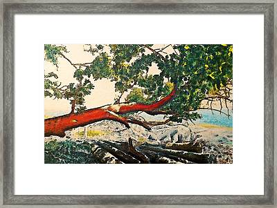 Arbutus Over Beach Framed Print by Stanley  Funk