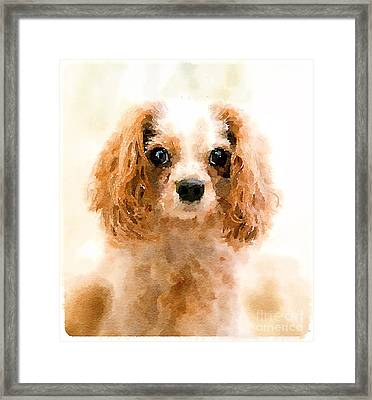 Archie Watercolour Framed Print by Jane Rix