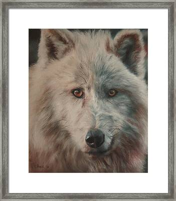Arctic Wolf Framed Print by Cherise Foster