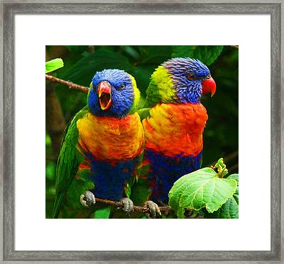 Are You Listening - Rainbow Lorikeets Framed Print by Margaret Saheed