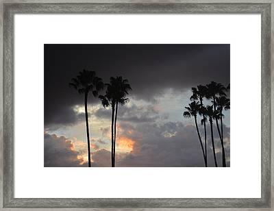 Arecaceae Framed Print by Nicholas Outar