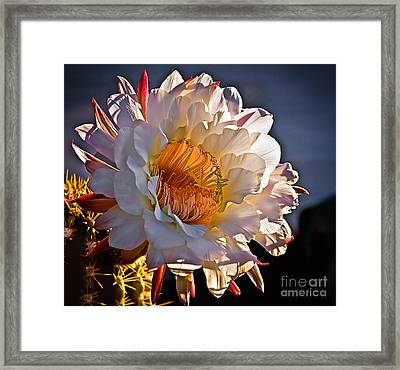 Argentine Giant II Framed Print by Robert Bales