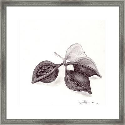 Arizona Seed Pod Framed Print by Joyce Blank