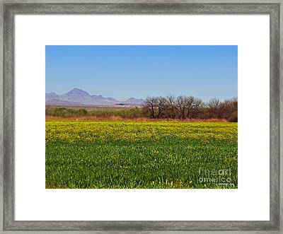 Arizona Spring Framed Print by Methune Hively