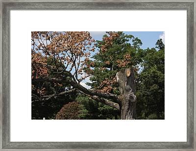 Arlington National Cemetery - 121242 Framed Print by DC Photographer
