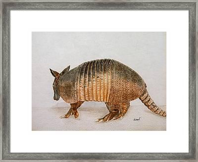 Armadillo Framed Print by Zina Stromberg