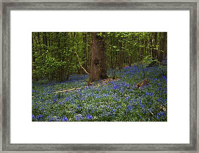 Around A Tree Framed Print by Svetlana Sewell