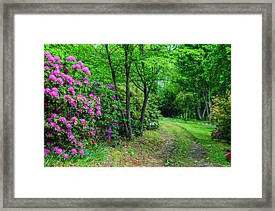Around The Bend Framed Print by Kenny Francis