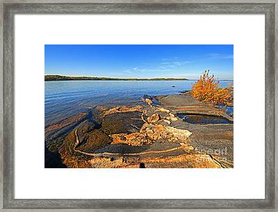 Art By Nature Framed Print by Charline Xia