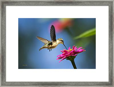 Art Of Hummingbird Flight Framed Print by Christina Rollo
