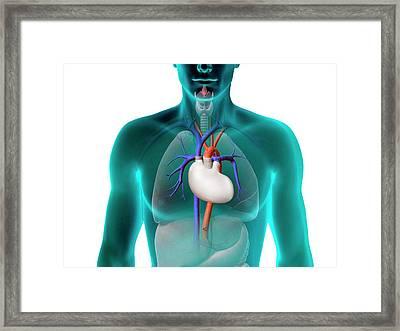 Artificial Heart Framed Print by Claus Lunau