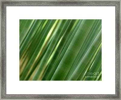 Artistic Abstract Of Bamboo Forest Culms Framed Print by Oleksiy Maksymenko
