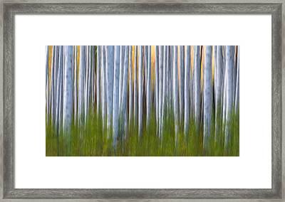 Artistic Aspens 2 Framed Print by Larry Marshall
