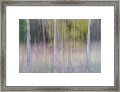 Artistic Birch Trees Framed Print by Larry Marshall