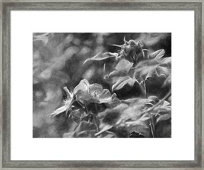 artistic painterly Black and white monochromatic two dogroses summer 2014 Framed Print by Leif Sohlman