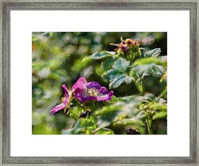 Artistic Painterly Two Dogroses Summer 2014. Framed Print by Leif Sohlman